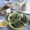White Tea: Defined and Simplified